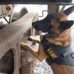 explosives detection canine k-9 missouri